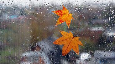 Последняя неделя октября будет холодной и дождливой